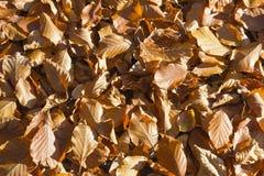 美好的秋天颜色的森林在一个晴天 库存图片