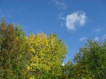 美好的秋天颜色 免版税库存照片