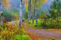 美好的秋天风景在一有雾的天 免版税库存图片