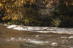 美好的秋天风景在有河急流在阳光下和在背景的五颜六色的树特写镜头的拉脱维亚  库存图片