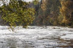 美好的秋天风景在有河急流在阳光下和在背景的五颜六色的树特写镜头的拉脱维亚  免版税库存图片