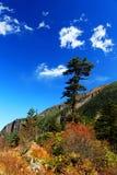 美好的秋天风景在海螺沟冰川公园 免版税图库摄影