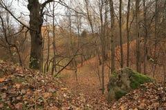 美好的秋天风景,自然颜色在维尔纽斯 免版税库存照片