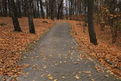 美好的秋天风景,自然颜色在维尔纽斯 库存图片