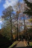 美好的秋天风景,自然颜色在维尔纽斯 库存照片