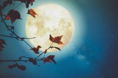 美好的秋天幻想 库存图片