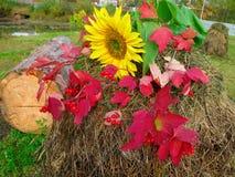 美好的秋天 库存图片