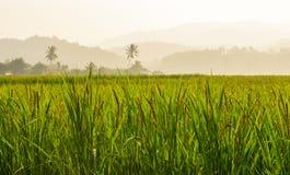 美好的米领域在地方国家泰国 免版税库存图片