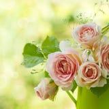 美好的粉红色在庭院里上升了 免版税库存图片