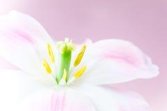 美好的粉红色 库存照片