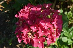 美好的精美在特写镜头的春天开花的五颜六色的杜鹃花在庭院里 库存图片