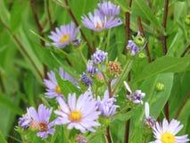 美好的紫色室外野花绽放 免版税库存照片