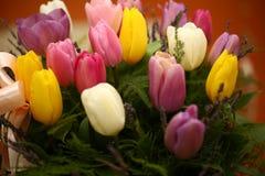 美好的紫色色的郁金香开花背景 免版税库存照片