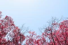 美好的红色在天空背景留下树 免版税图库摄影