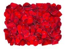 美好的红色玫瑰花瓣背景 库存照片