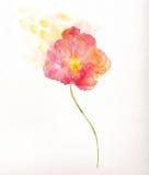美好的红色花水彩绘画 免版税库存图片