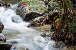 美好的细节关闭柔滑的光滑的流动在森林秋天生动的有选择性的颜色的缎软的河 库存照片