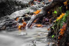 美好的细节关闭柔滑的光滑的流动在森林秋天生动的有选择性的颜色的缎软的河 图库摄影