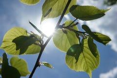 美好的绿色在晴天把背景留在 免版税库存照片