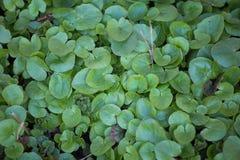 美好的绿色春天在森林自然再生物在早期的春天离开 免版税库存照片