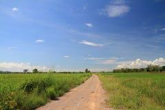 美好的绿色米领域明亮的阳光视图风景 库存图片