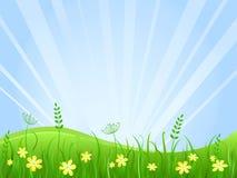 美好的绿色草甸场面 库存图片