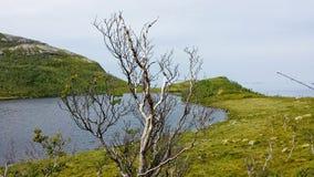 美好的绿色贫瘠风景在与蓝色海湾和海在远的背景中和结尾杆的夏天在右边 库存图片