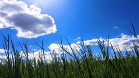 美好的绿色领域在蓝天, timelapse下 影视素材