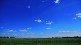 美好的绿色领域在蓝天, timelapse, 4K下 股票录像