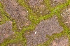 美好的老绿色生苔铺的砖背景 免版税图库摄影