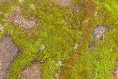 美好的老绿色生苔铺的砖背景 库存照片