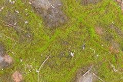 美好的老绿色生苔铺的砖背景 免版税库存照片