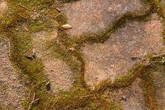 美好的老绿色生苔铺的砖背景 图库摄影