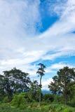 美好的自然五颜六色风景反对蓝天的和多云在平静的自然 免版税库存照片