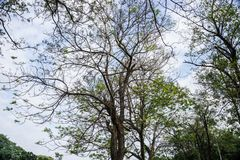 美好的自然在公园创造华美的树 库存图片