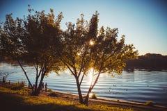美好的自然在城市公园 免版税库存照片