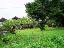 美好的自然在巴厘岛 免版税图库摄影