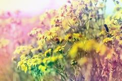 美好的自然在春天-开花的草甸 库存照片