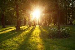 美好的自然在晚上在春天森林,与太阳的树发出光线 库存图片