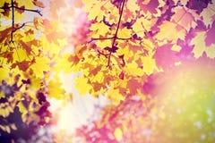 美好的自然在秋天-通过树枝晒黑发光 库存照片