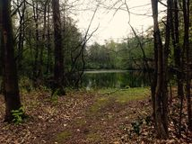 美好的自然用绿色自然和水 免版税库存照片