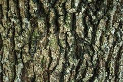 美好的自然难看的东西和肮脏的木头 树干用途纹理  库存照片