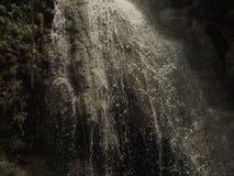 美好的自然风景在森林里 免版税库存照片