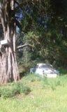 美好的自然风景,旅行的农厂汽车 免版税库存照片