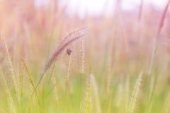 美好的自然风景-高山草甸 与光束的草特写镜头 与太阳火光的美好的自然风景 葡萄酒乌贼属 免版税库存图片