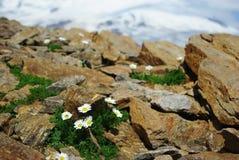 美好的自然,山风景 免版税图库摄影