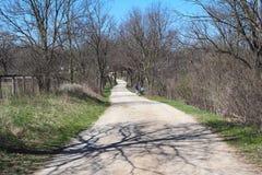 美好的自行车和步行在森林里落后 库存照片