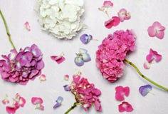 美好的花卉构成 库存图片