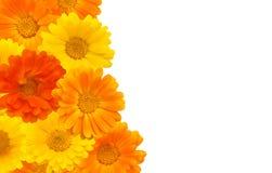 美好的花卉装饰边界 库存照片