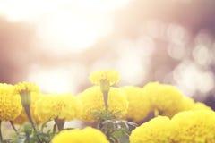 美好的花和阳光本质上 免版税库存照片